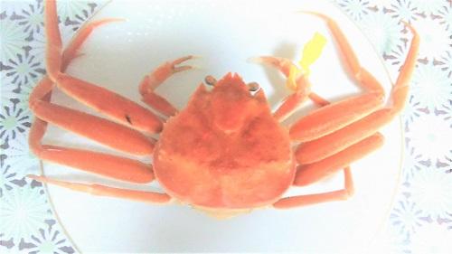 越前湾産セイコ蟹