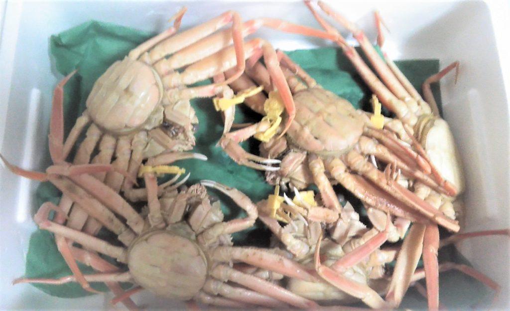 梱包されたセイコ蟹