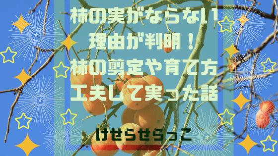 柿の木のアイキャッチ
